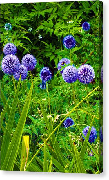Blue Allium Flowers Canvas Print