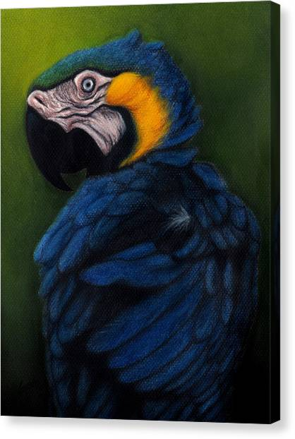 Blue And Gold Macaw Canvas Print by Enaile D Siffert