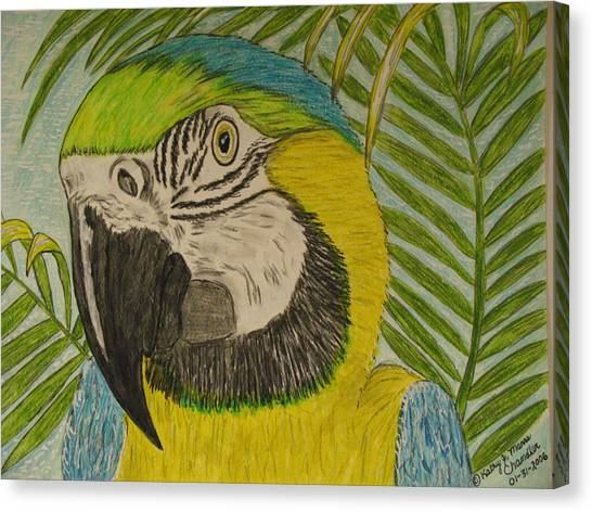 Blue And Gold Macaw Parrot Canvas Print