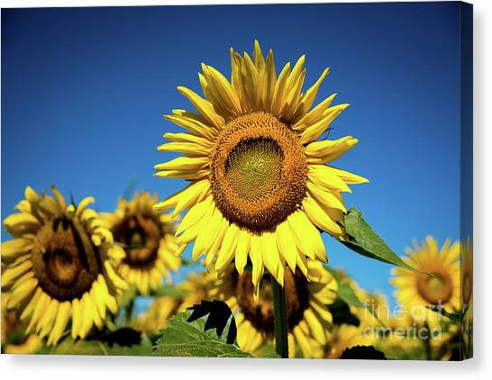 Blue And Gold Canvas Print