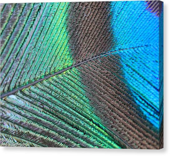 Blue And Green Feathers Canvas Print