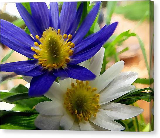 Blue And White Anemones Canvas Print