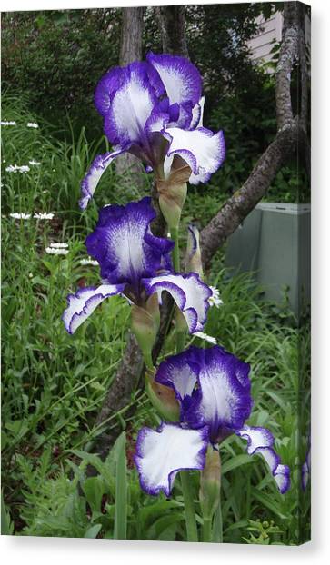 Blue And White Iris Monet Like Canvas Print