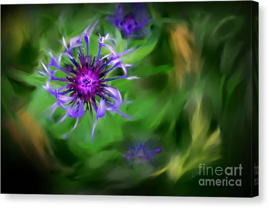 Blue Bachelor Button Canvas Print