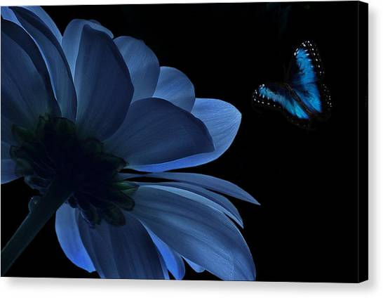 Blue Beauty Canvas Print by Marrissia Ruth