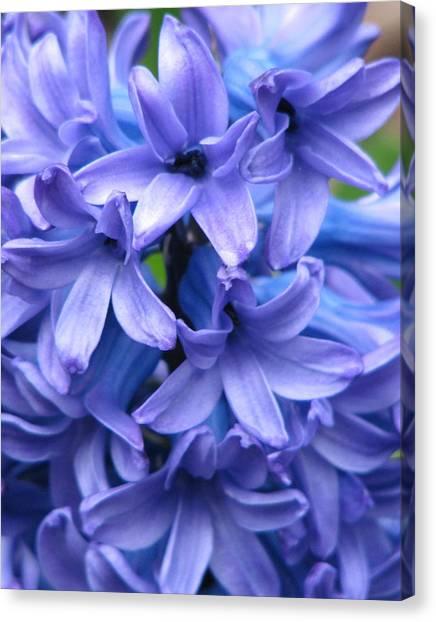 Blue Belles Canvas Print by Staci-Jill Burnley