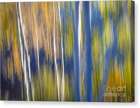 Abstraction Canvas Print - Blue Birches On Lake Shore by Elena Elisseeva