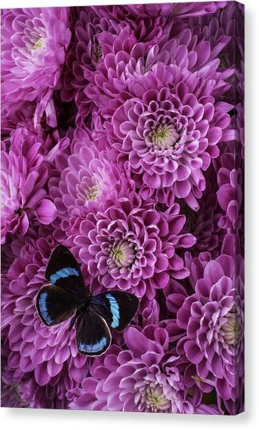 Pom-pom Canvas Print - Blue Black Butterfly by Garry Gay