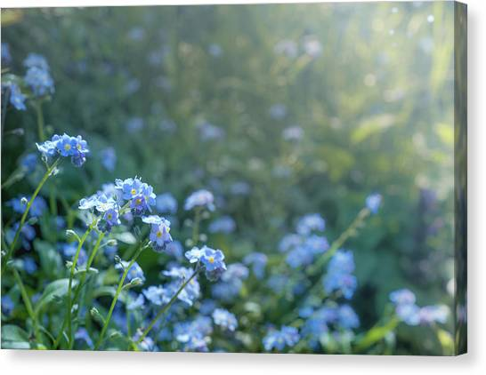 Canvas Print featuring the photograph Blue Blooms by Gene Garnace