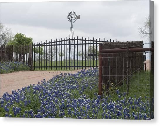 Blue Bonnets By Gate Canvas Print