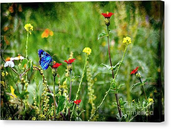 Blue Butterfly In Meadow Canvas Print
