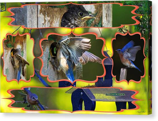 Canvas Print featuring the photograph Blue Collage 2 by Angel Cher