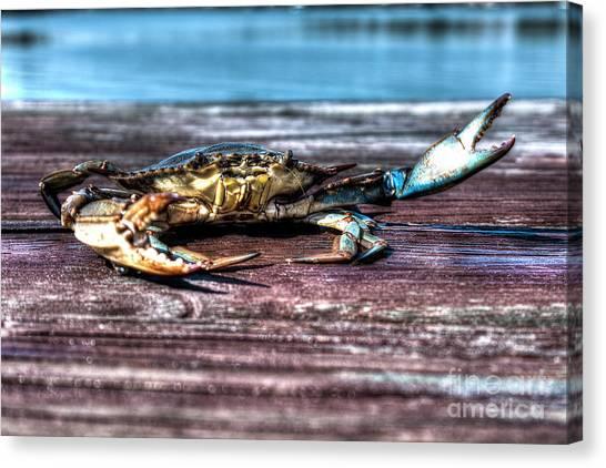 Blue Crab - Big Claws Canvas Print