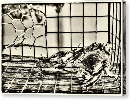 Blue Crabs - Vintage Canvas Print