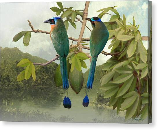 Blue-crowned Motmots In Kapok Tree Canvas Print