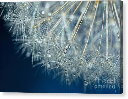 Blue Dandelion Dew By Kaye Menner Canvas Print