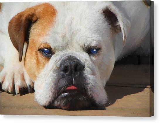 Blue-eyed English Bulldog - Painting Canvas Print