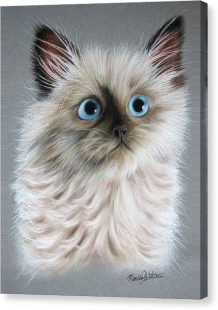 Himalayan Cats Canvas Print - Blue Eyes by Monica  Webster
