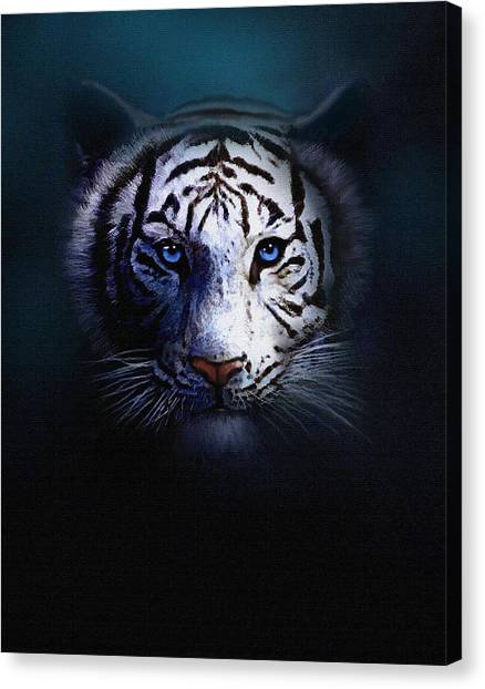 Fine Art India Canvas Print - Old Blue Eyes by Robert Foster