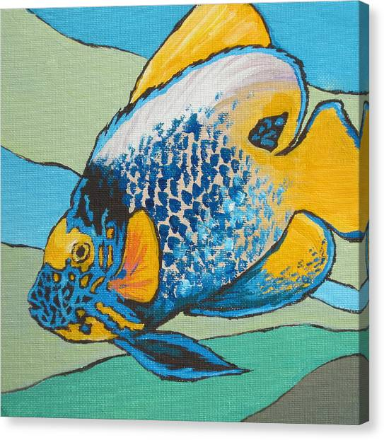 Blue Face Angelfish Canvas Print by Sandy Tracey
