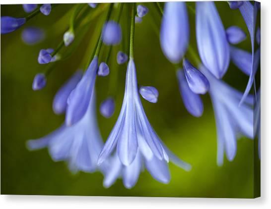 Onions Canvas Print - Blue Flowers by Nailia Schwarz