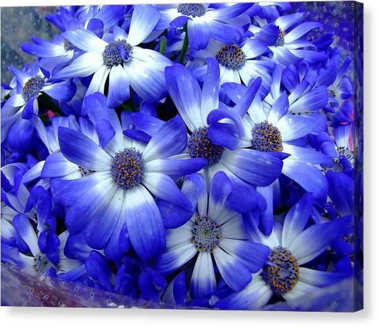 Blue Flowers Canvas Print by Simona Stroescu