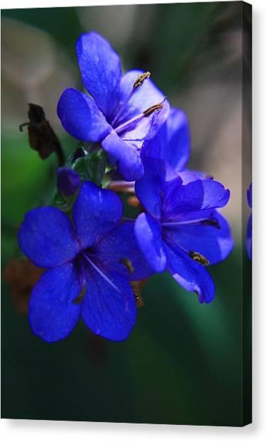 Blue For The Sun Canvas Print