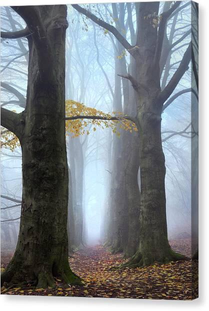 Forest Paths Canvas Print - Blue Forest by Ton Schrederhof Fotografie