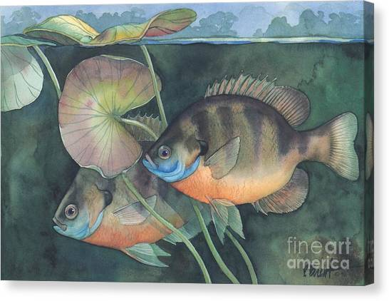 Freshwater Canvas Print - Blue Gill by Paul Brent
