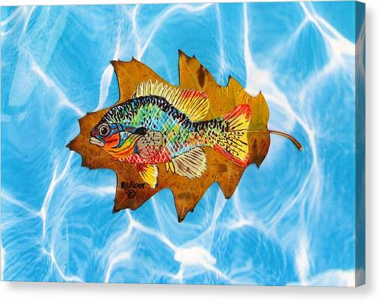 Blue Gill Canvas Print