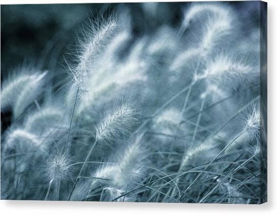 Susann Serfezi Canvas Print - Blue Gras by AugenWerk Susann Serfezi