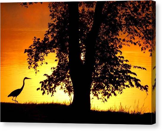 Blue Heron At Sunrise Canvas Print