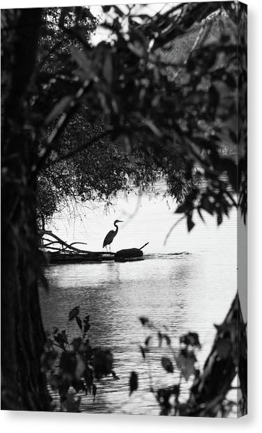 Blue Heron In Black And White. Canvas Print