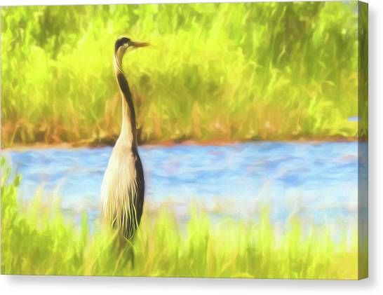 Blue Heron Standing Tall And Alert Canvas Print