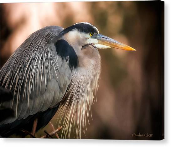 Canvas Print featuring the photograph Blue Heron Thinking by Claudia Abbott