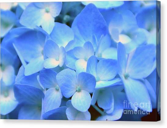 Blue Hydrangea Canvas Print