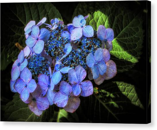 Canvas Print featuring the photograph Blue In Nature by Elaine Malott