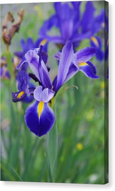 Blue Iris Flower Canvas Print