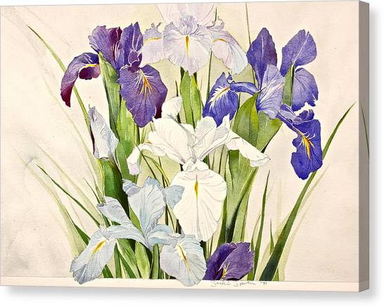 Blue Irises-posthumously Presented Paintings Of Sachi Spohn  Canvas Print