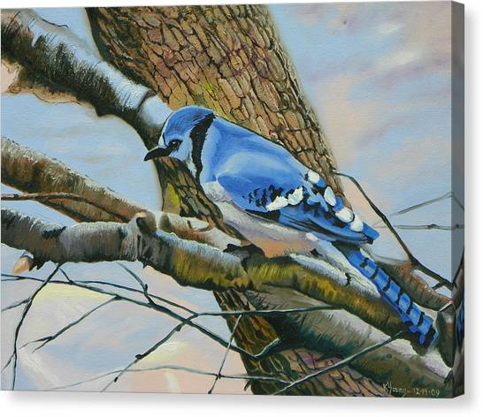 Blue Jay Canvas Print by Kenneth Young