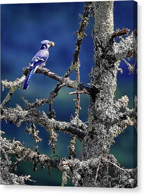 Blue Jay Mountain Canvas Print