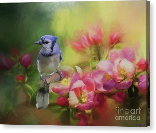Blue Jay On A Blooming Tree Canvas Print