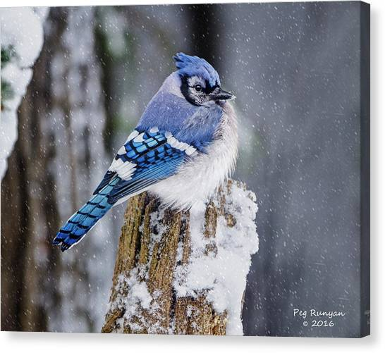Canvas Print - Blue Jay On Snowy Post by Peg Runyan