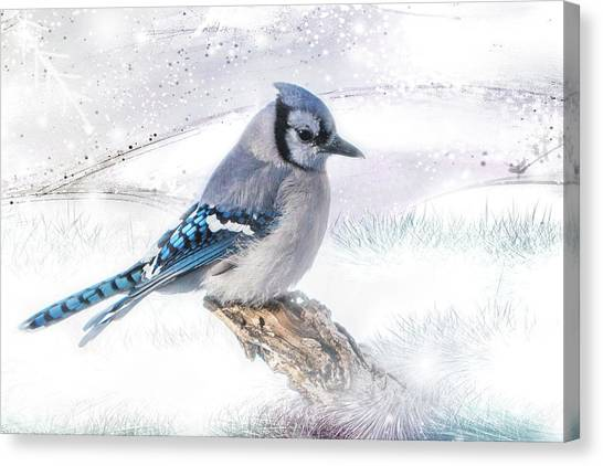 Blue Jay Snow Canvas Print