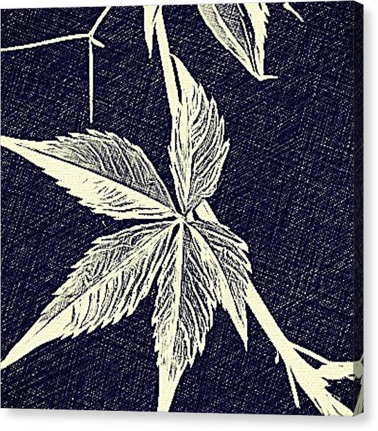 Blue Leaf Canvas Print