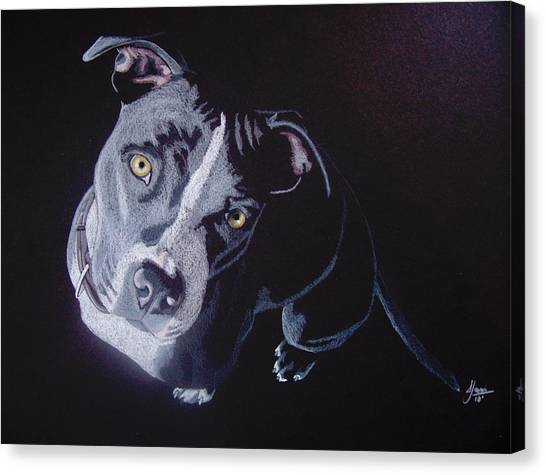 Pit Bull Canvas Print - Blue Light by Stacey Jasmin