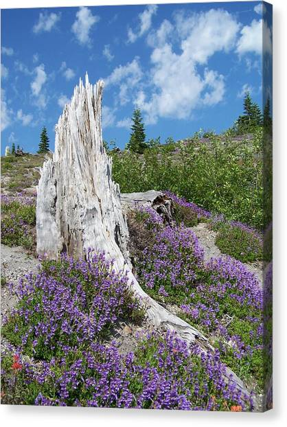 Blue Lupine Canvas Print