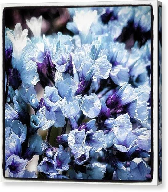 Canvas Print featuring the photograph Blue Melancholia. #flowerart by Mr Photojimsf