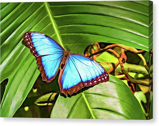 Blue Camo Canvas Print - Blue Morpho Butterfly 2 - Paint by Steve Harrington