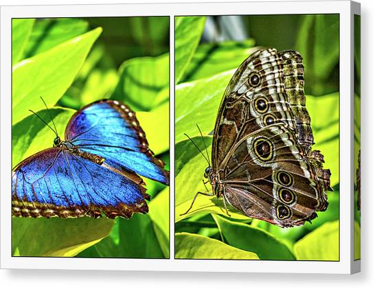 Blue Camo Canvas Print - Blue Morpho Butterfly Diptych by Steve Harrington